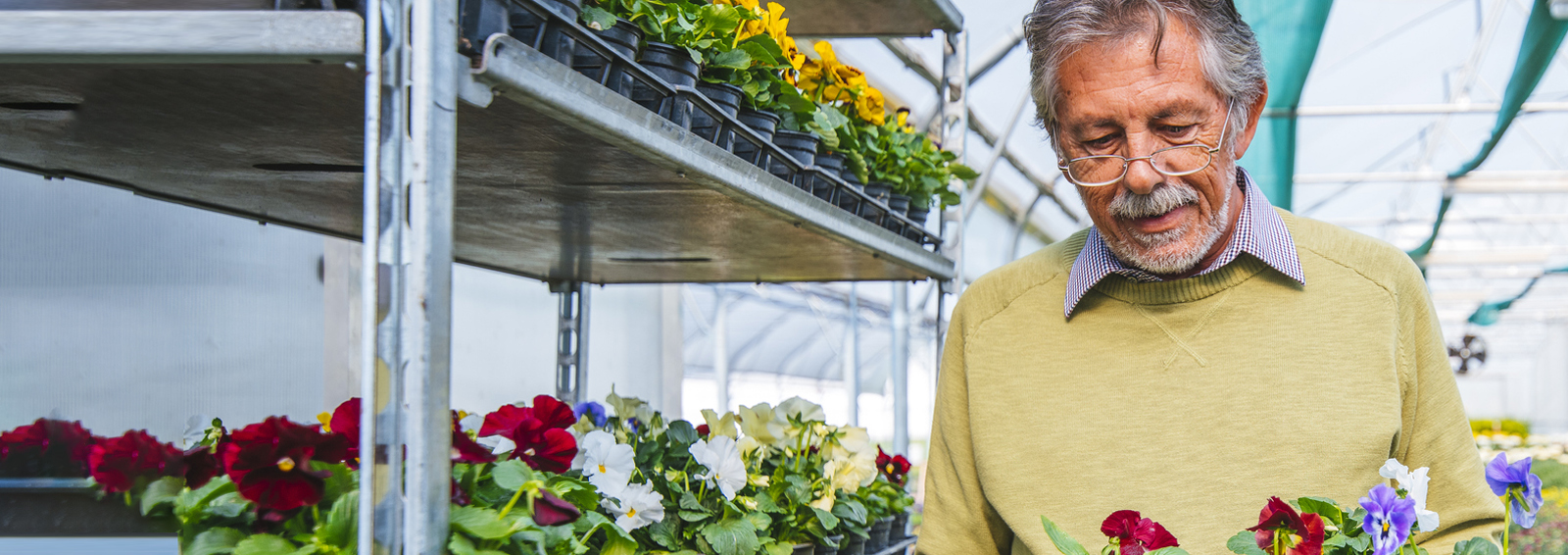 older man in greenhouse with flowers