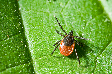 wellness lyme tick season