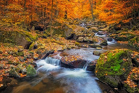 Beautiful creek surrounded by changing autumn leaves.