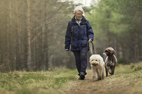 Senior woman walking her dogs